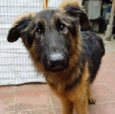 Dog in my local shelter reminds me of Dug