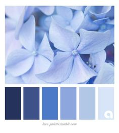 Pantone Color 2016 - Rosenquarz und Serenity in Dekoration und Mode Serenity Color, Rose Quartz Serenity, Bleu Pantone, Pantone Color, Blue Color Schemes, Color Azul, Hydrangea, Shade Roses, Mode Rose