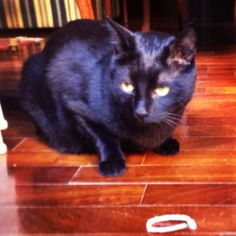 Nerino guarding his prey...a pipe cleaner...