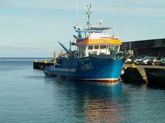 PORTO DA CALHETA: Pesca Atum