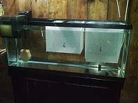 DIY tank divider (horizontal) for breeding guppies in a 14