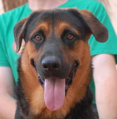 Justice is a young, joyful boy debuting for adoption today at Nevada SPCA (www.nevadaspca.org).  He loves being around people and appears to be compatible with at least some other friendly dogs (we are still learning about him).  Justice is a German Shepherd & Rottweiler mix, 1 year of age, and now neutered.  He was found in a park with no sign of responsible ownership (no ID tag, no microchip ID, not neutered).