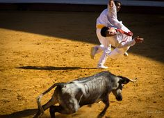 Feria Dax 2013 Travel Information, In This Moment, Animals, Animales, Animaux, Animal, Animais