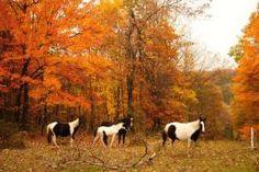 A few of my neighbor's horses