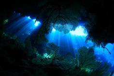 PADI News - 水中写真家・鍵井靖章 写真展『青い地球のカシュ』8月11日まで開催!                                                                                                                                                      もっと見る