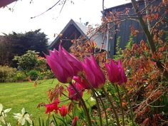 Craigatin House and Courtyard Pitlochry Tulips