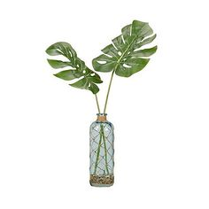 Bring a bit of tropical flair to your décor with the D and W Silks Split Leaf Philo in Glass Vase , featuring two large faux palm leaves in. Blue Bottle, Bottle Vase, Glass Bottles, Plant In Glass, Blue Glass Vase, Tropical Decor, Coastal Decor, Shops, Green Home Decor