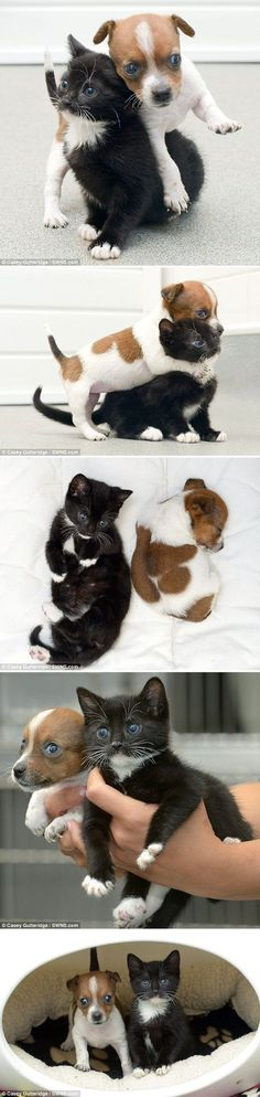 The best part? This rescue cat and dog duo will grow up to be about the same size.  Awwww!!!