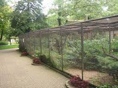 Image result for jaula gigante pájaros