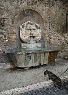 Fountain and dog in Rome, Italy Detail Architecture, Ancient Architecture, Rome Streets, Garden Fountains, Daily Photo, Ancient Rome, Vacation Spots, Tuscany, Cool Photos