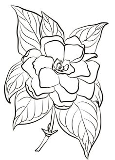 Gardenia coloring page from Gardenia category. Select from 26388 printable crafts of cartoons, nature, animals, Bible and many more. Gardenias, Horse Drawings, Art Drawings, Drawing Art, Gardenia Tattoo, Rock Flowers, Yellow Flowers, Leather Tooling Patterns, Colored Pencil Techniques
