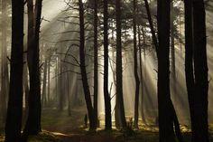 Inowłodzki las