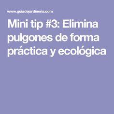 Mini tip #3: Elimina pulgones de forma práctica y ecológica