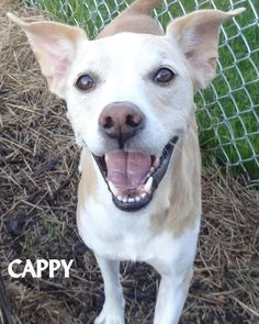 ADOPTED! Tag# 12566 Name is Cappy Shepherd/Collie Mix Male-neutered Approx. 6-8 years old Sweet fella who likes to lean into you for affection!  Located at 2396 W Genesee Street, Lapeer, Mi. For more information please call 810-667-0236. Adoption hrs M-F 9:30-12:00 & 12:30-4:15, Weds 9:30-12:00 & Sat 9:00-2:00  https://www.facebook.com/267166810020812/photos/a.920475758023244.1073742208.267166810020812/920476318023188/?type=3&theater