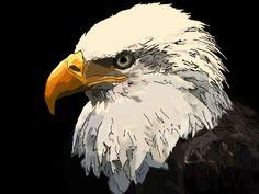 bald eagle   bald-eagle_1_600x450