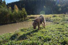 Gårdstunet Hundepensjonat: Nok en fin dag med herlige hunder