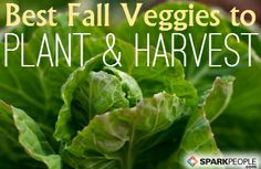 Fall veggies you can plant RIGHT NOW! | via @SparkPeople #food #garden #vegetable #grow