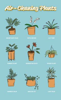 The beds are made and the dishes are done but there's always more to clean — like the air, for instance. We rounded up nine plants that give your home a breath of fresh air.