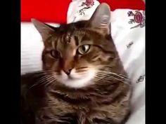 Кот в шоке от петуний.   Cat Flower.