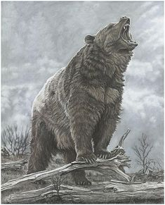Bear Print Last Stand Gary Johnson Wildlife Wonders - This Impressive Limited Edition Bear Print Last Stand By Gary Johnson Captures The Strength And Power Of This Ferocious Predator In His Natural Habitat Wildlife Paintings, Wildlife Art, Ours Grizzly, Grizzly Bears, Grizzly Bear Tattoos, Grizzly Bear Drawing, Urso Bear, Photo Animaliere, Bear Pictures