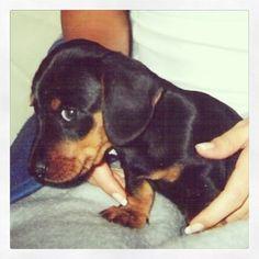 My little dachshund almost 12 years ago.