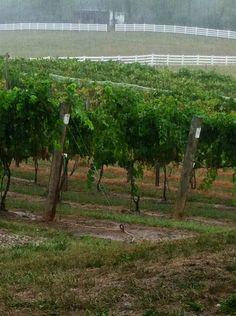 Winery in Lancaster, Ohio!