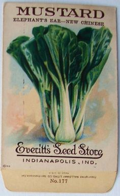 EVERITT'S SEED STORE, Mustard 177, Vintage Seed Packet