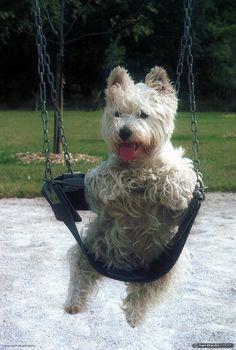 Dog in a swing