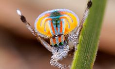 The secret of the incredible 'rainbow spider' revealed #DailyMail