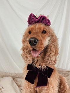 Scrunchies, Dogs, Animals, Animales, Animaux, Pet Dogs, Doggies, Animal, Animais