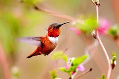 A beautiful picture of Colorful Hummingbird and #Flower Wallpaper downloaded from http://alliswall.com
