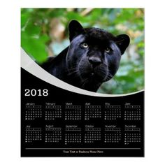 2018 Black Panther Gaze Wildlife Poster Calendar - cat cats kitten kitty pet love pussy
