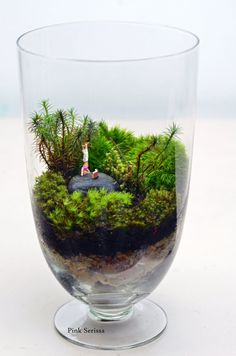 Bonsai Terrarium For Landscaping Miniature Inside The Jars 103 - DecOMG Mini Terrarium, Terrarium Scene, Succulent Terrarium, Glass Terrarium Ideas, Terrarium Wedding, Bonsai, Moss Plant, Jar Design, Design Ideas