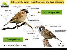 Get to know your sparrows little closely