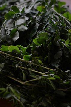 Morniga Leaves aka Drumstick leaves Image ~ ©Nessy Samuel #NessySamuelPhotography #FoodPhotography #FoodStyling #Photographer