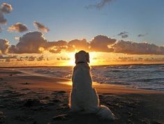 """Why dogs live shorter lives-""""People are born so that they can learn how to live a good life — like loving everybody all the time and being nice, well dogs already know how to do that so they don't have to stay as long""""-Unknown"""