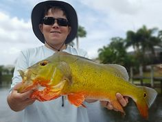 """Peacock Bass fishing in Florida is a phenomenon that I have personally witnessed from the beginning. As a kid we chased around these """"water trucks"""" that were pumping Peacock Bass fry in… Peacock Bass, Fishing Charters, Pumping, Bass Fishing, Florida, Trucks, Kid, Water, Child"""