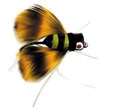 Bee Popper -- fishing lure