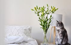 Bedroom Makeover: 9 Feng Shui Tips for Better Sleep Essential Oils For Stress, Essential Oils Cleaning, Coconut Oil For Dogs, Feng Shui Bedroom, Feng Shui Tips, Indoor Flowers, Meditation Space, Cozy Corner, Easy Install