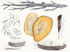 Nature Collection with Squash, original watercolor painting by ArtGoods