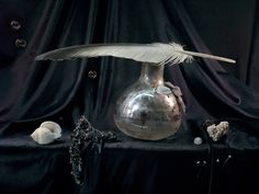 Represented at Starkwhite Modern Photography, Still Life Photography, Fashion Photography, Uta Barth, Paint Prep, Still Life 2, Master Of Fine Arts, Feather Art, Vanitas