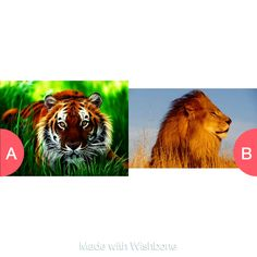 Tiger or lions Click here to vote @ http://getwishboneapp.com/share/1027220
