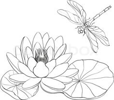 Stock vector of 'Water Lily and dragonfly isolated over white. Vector illustration.'