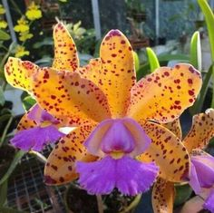 | Exotic Plants, Exotic Flowers, Tropical Flowers, Cactus Plants, Beautiful Flowers, Fruit Garden, Tropical Garden, Rose Bush Care, Orchid Varieties
