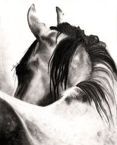 Design to draw - Draw Pattern - THE LOOK, Charcoal Drawing of a Horse, Black and White, Contrast... Draw Pattern & inspiration  Preview – Pattern    Description  THE LOOK, Charcoal Drawing of a Horse, Black and White, Contrast  – Source –