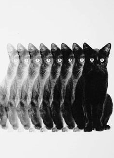 """""""One day I was counting the cats and I absent-mindedly counted myself."""" ― Bobbie Ann Mason"""