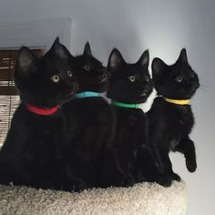 Black cats Black cats are beautiful. I use to think I could tell them apart, but I was wrong. This is only way to tell them apart. Different collars help. Theincensewoman