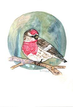 Bird watercolor by Anastasy Siilin