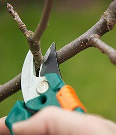 Tips for spring pruning