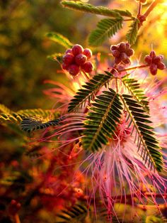 Nature's fireworks